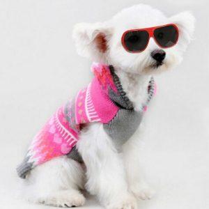 kıyafetli tatli köpek