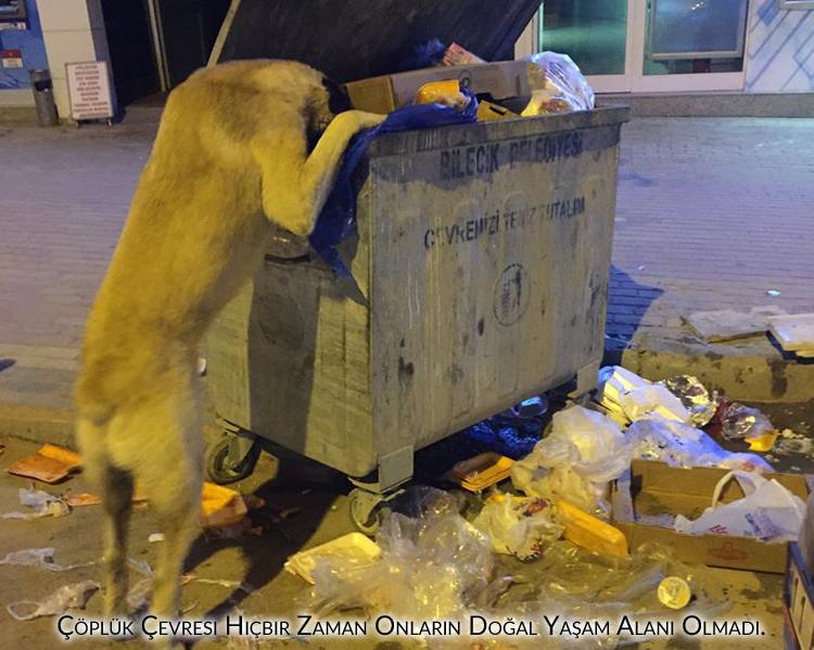 evlerinde kedi ve köpek beslemeyenler, çöplükler