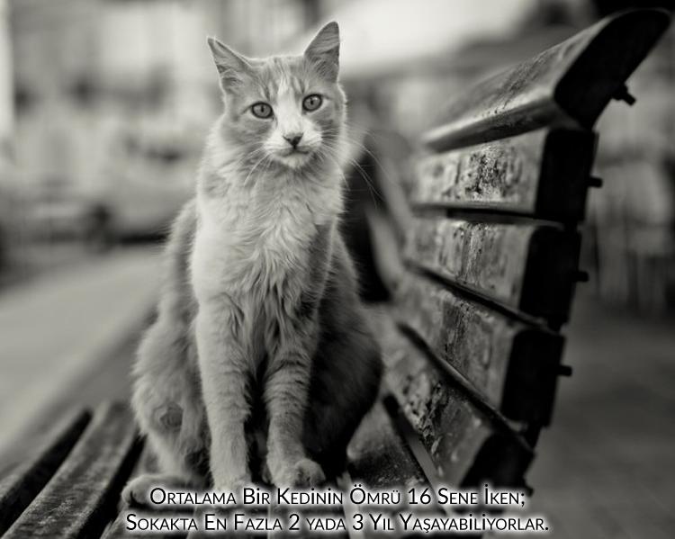 evlerinde kedi ve köpek beslemeyenler, kısalan ömür