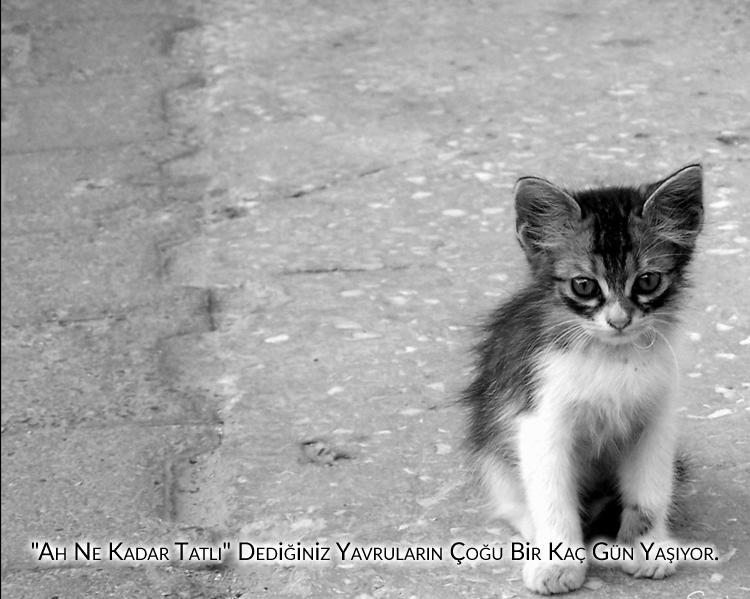 evlerinde kedi ve köpek beslemeyenler, masum yavrular