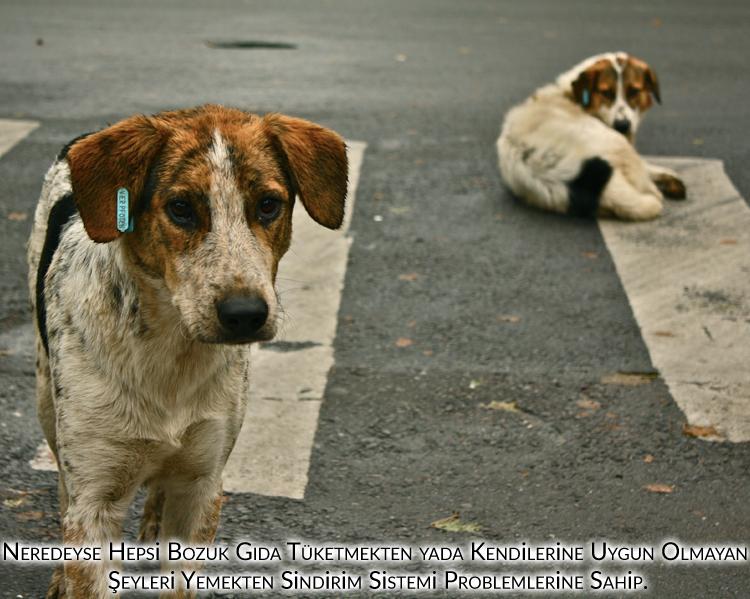 evlerinde kedi ve köpek beslemeyenler, Bozuk gıdalar