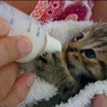 biberonla kedi besleme uygun pozisyon, kedi besleme