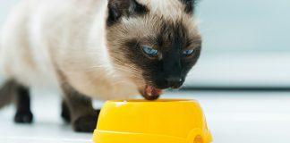 yetişkin kedilerde beslenme