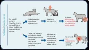 Yaşlı kedilerde beslenme
