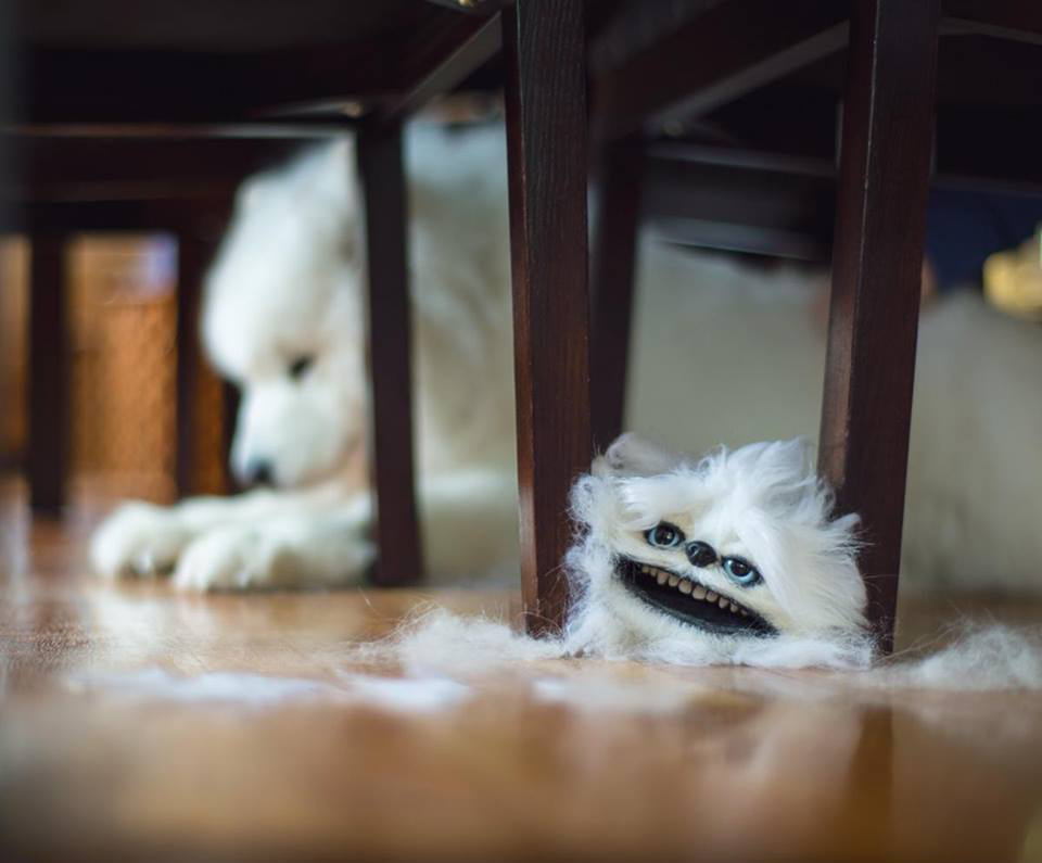 kedi ve köpekler de tüy dökülmesine çözüm