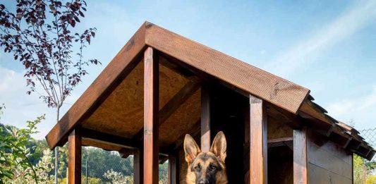ideal köpek kulübesi seçimi